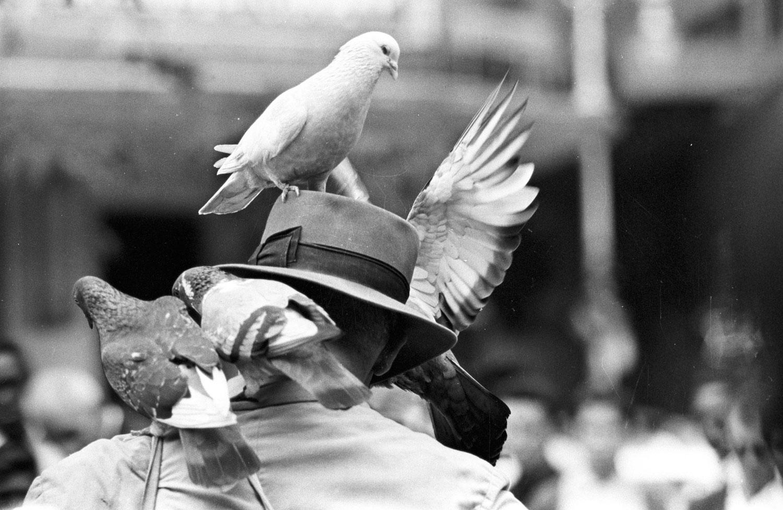 Apresentação de artista de rua com pombos em praça do Rio de Janeiro RIO-ANTIGO-07